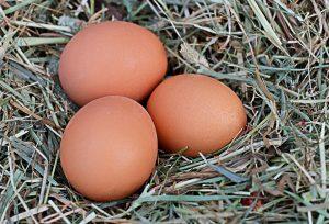 Rischi tossicità uova contaminate